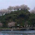 能島さくら5