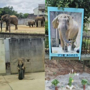 ゾウの家族とアフお父さんのお墓